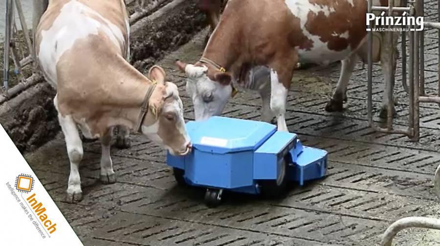 Der hochmoderne und innovative Serviceroboter PRIBOT reinigt vollautomatisch und selbständig Spaltenböden in Rinderställen.